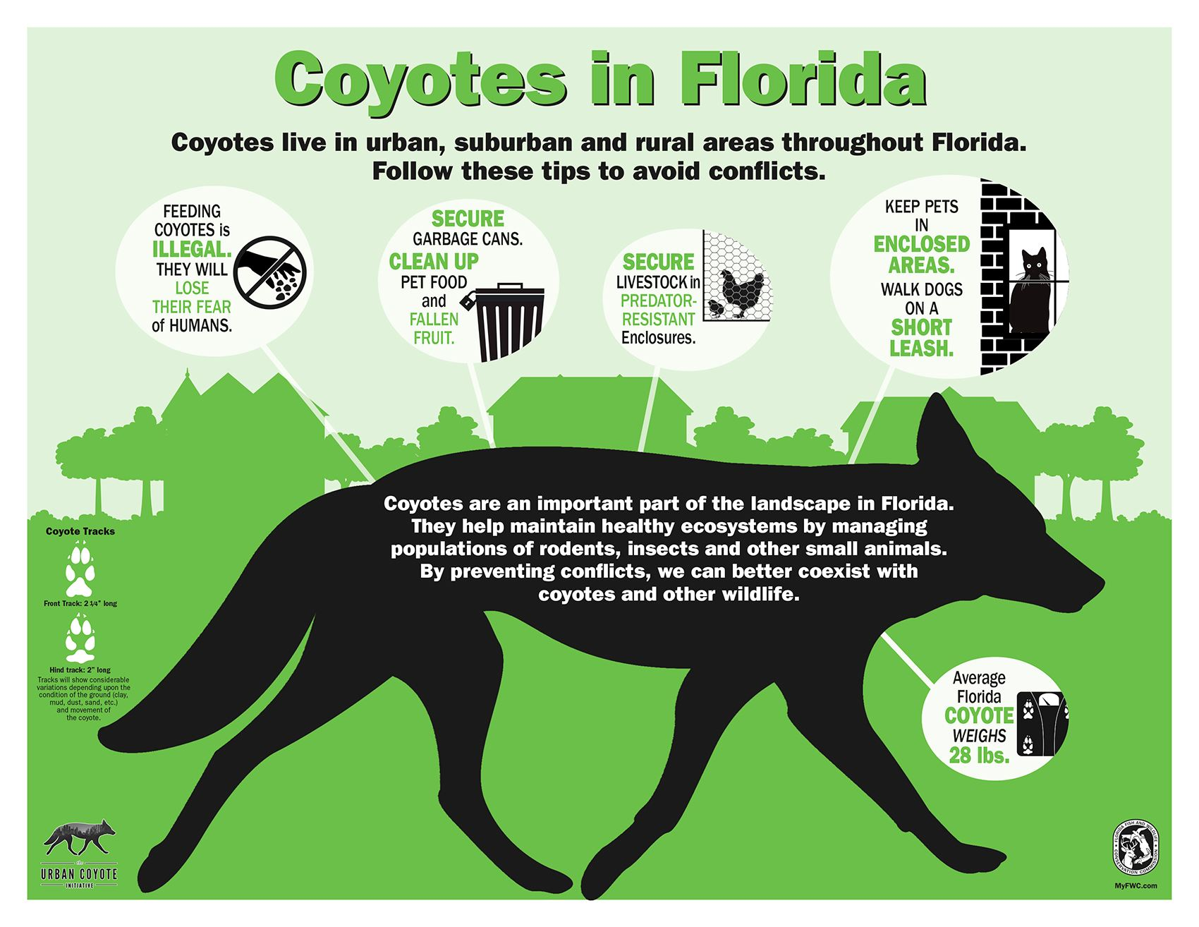 coyotes-in-florida-infographic
